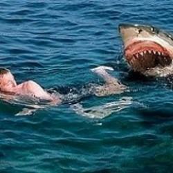 Yoksa kocaman bir köpekbalığının olduğu bir deniz mi?